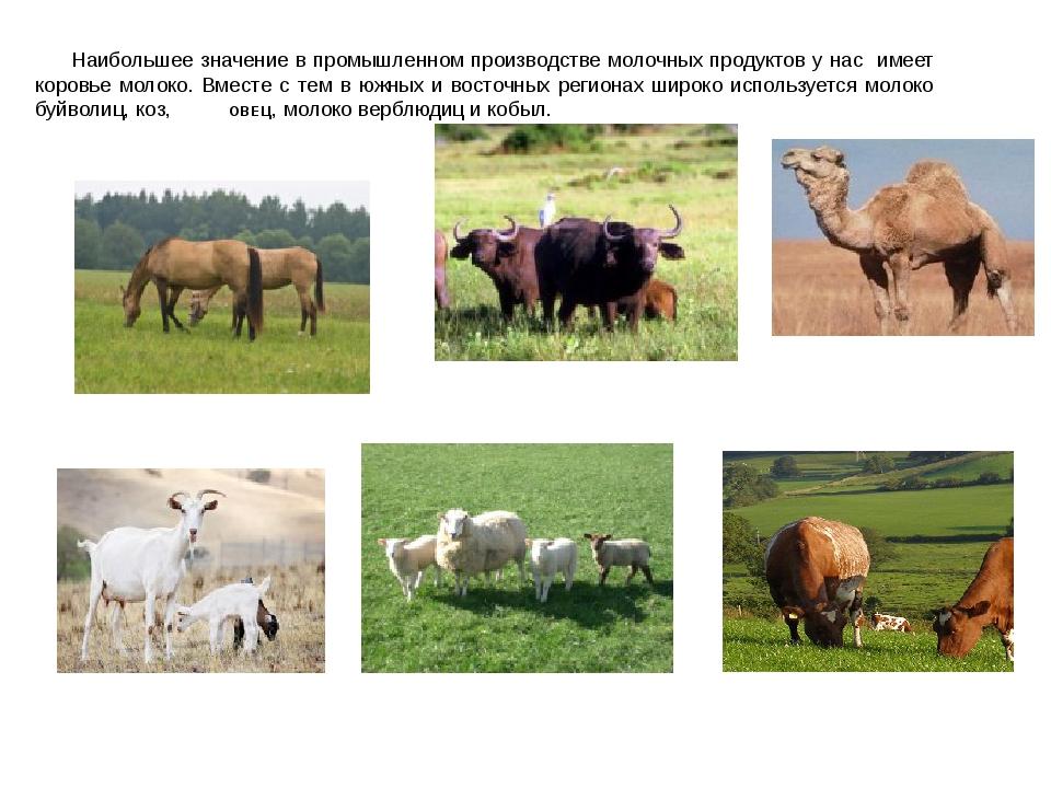 Наибольшее значение в промышленном производстве молочных продуктов у нас име...