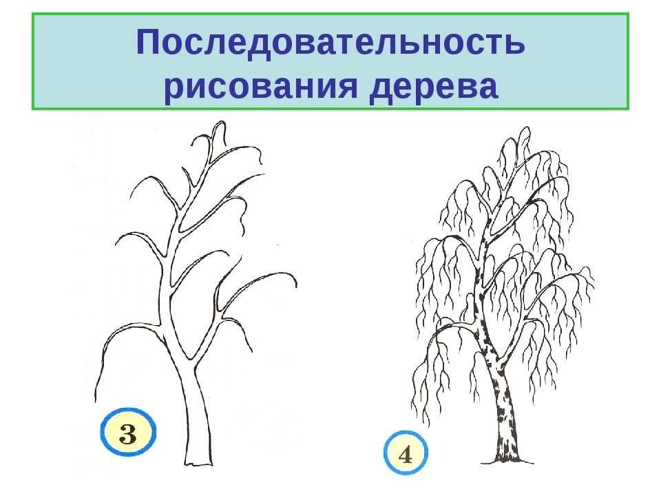 succession in tree tyle