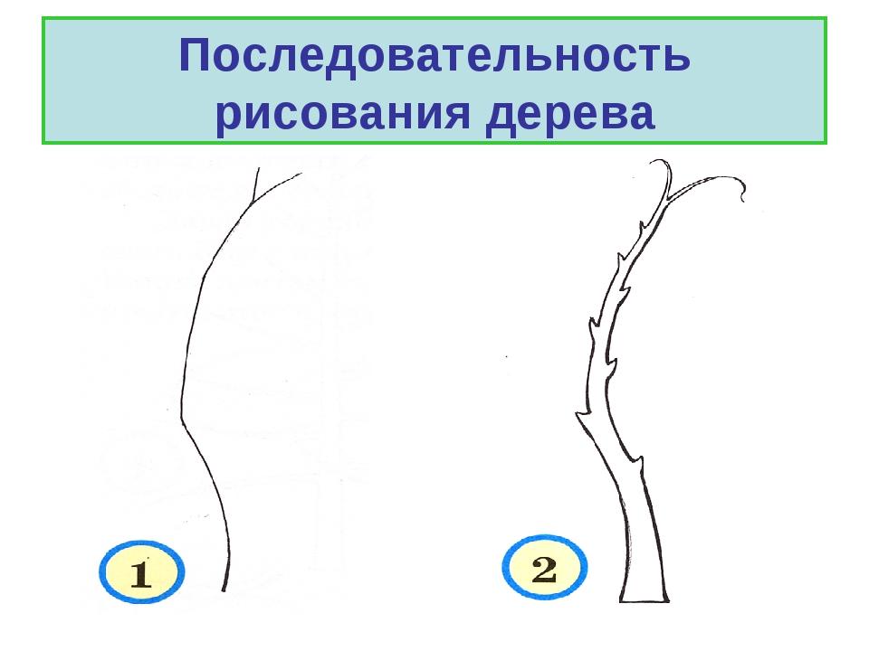 Последовательность рисования дерева