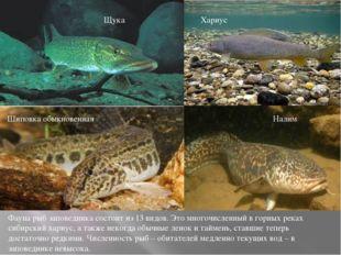 Щука Хариус Шиповка обыкновенная Налим Фауна рыб заповедника состоит из 13 в