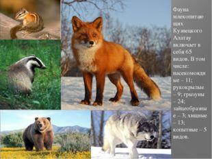 Фауна млекопитающих Кузнецкого Алатау включает в себя 65 видов. В том числе:
