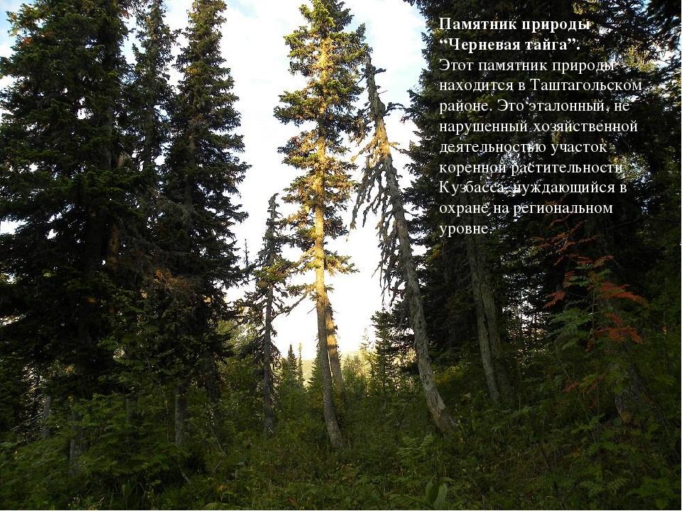 """Памятник природы """"Черневая тайга"""". Этот памятник природы находится в Таштаго..."""