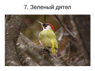 7. Зеленый дятел