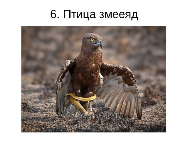 6. Птица змееяд