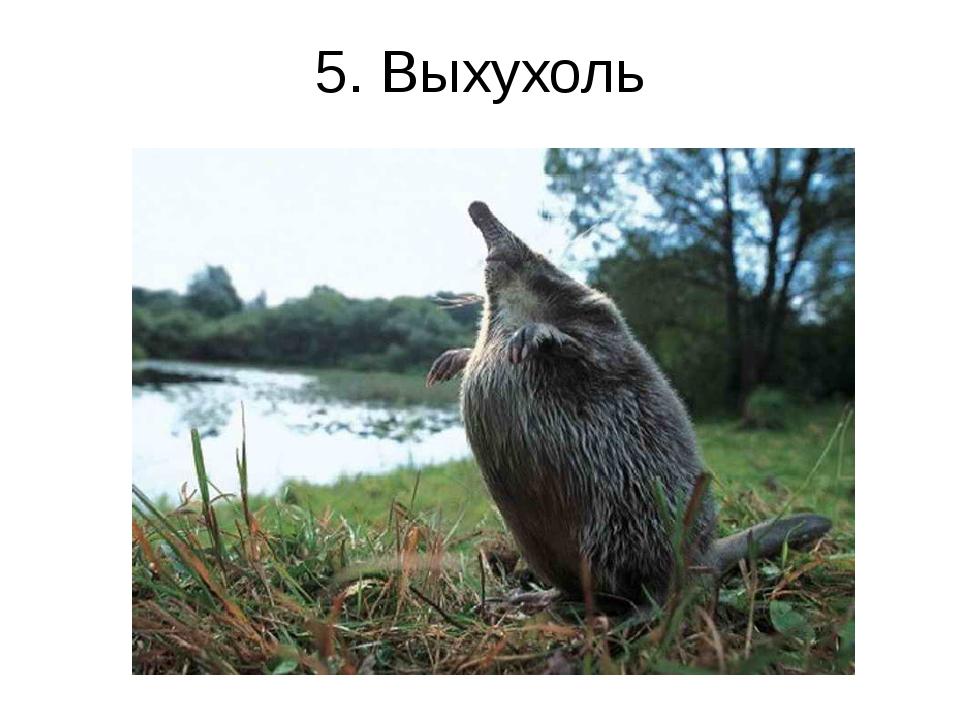 5. Выхухоль