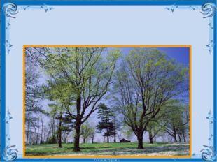 Составьте предложения по картине, используя полные и краткие прилагательные