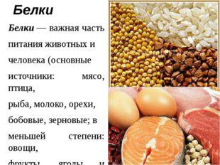 Белки Белки— важная часть питания животных и человека (основные источники: м