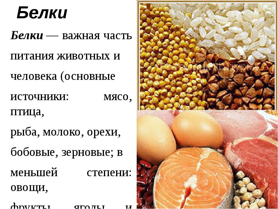 Белки Белки— важная часть питания животных и человека (основные источники: м...