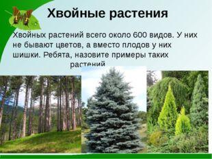 Хвойные растения Хвойных растений всего около 600 видов. У них не бывают цвет