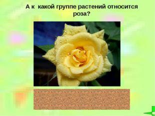 А к какой группе растений относится роза? цветковые