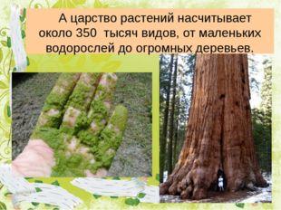 А царство растений насчитывает около 350 тысяч видов, от маленьких водоросл