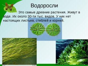 Водоросли Это самые древние растения. Живут в воде. Их около 30-ти тыс. видов