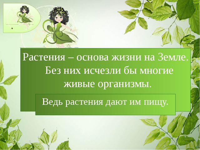 Растения – основа жизни на Земле. Без них исчезли бы многие живые организмы....