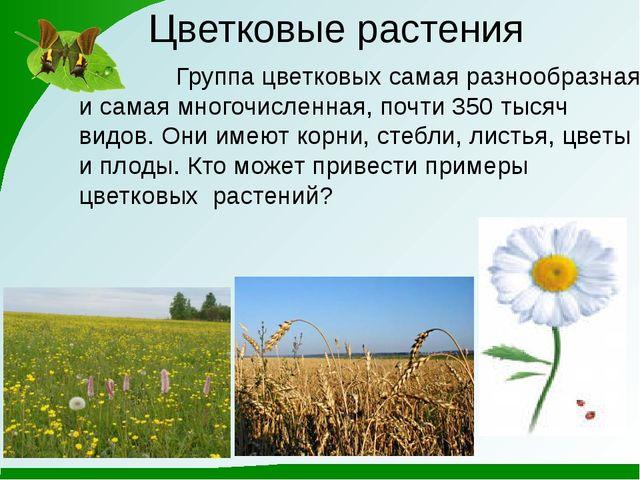 Цветковые растения Группа цветковых самая разнообразная и самая многочисленна...