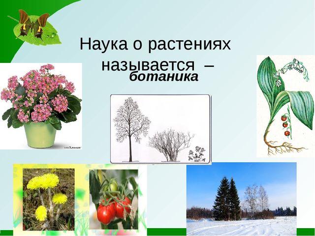 Наука о растениях называется – ботаника.