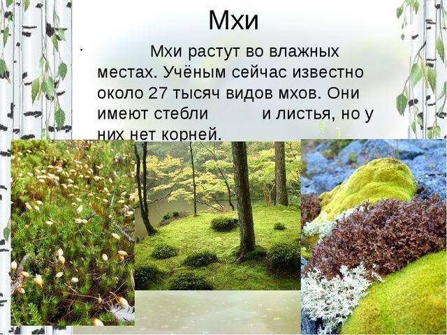 Мхи Мхи растут во влажных местах. Учёным сейчас известно около 27 тысяч видов...