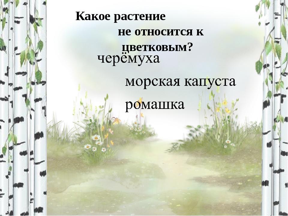 Какое растение относится к хвойным? кедр папоротник осока