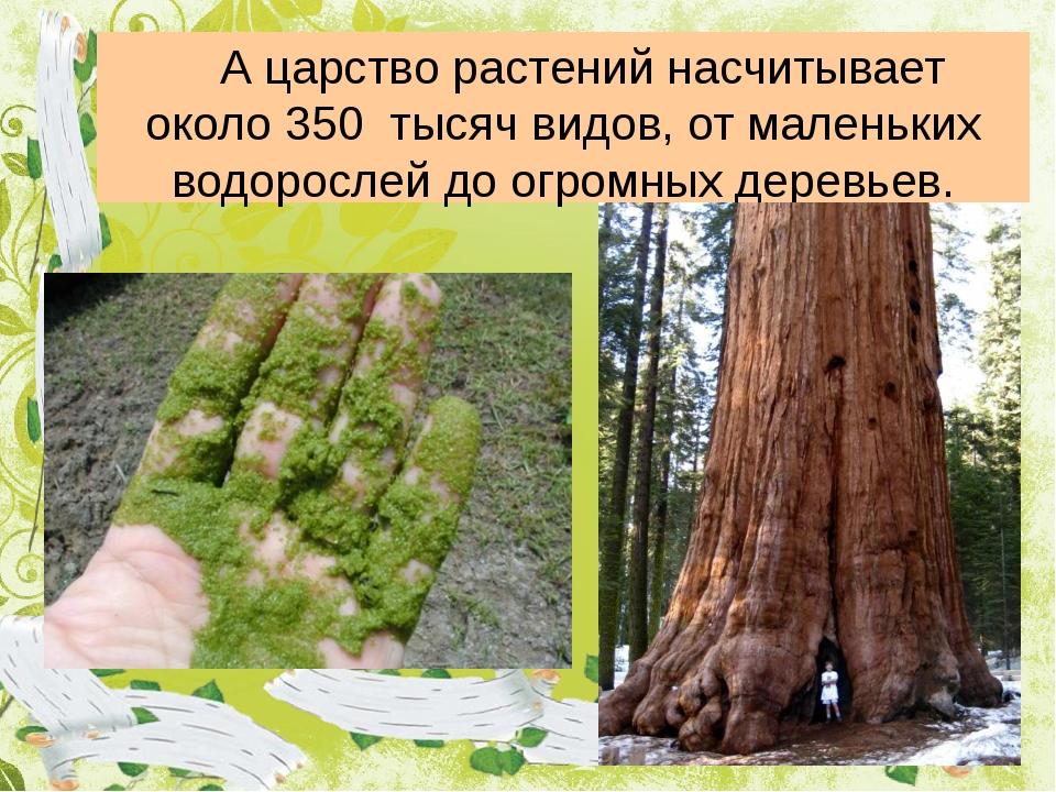 А царство растений насчитывает около 350 тысяч видов, от маленьких водоросл...