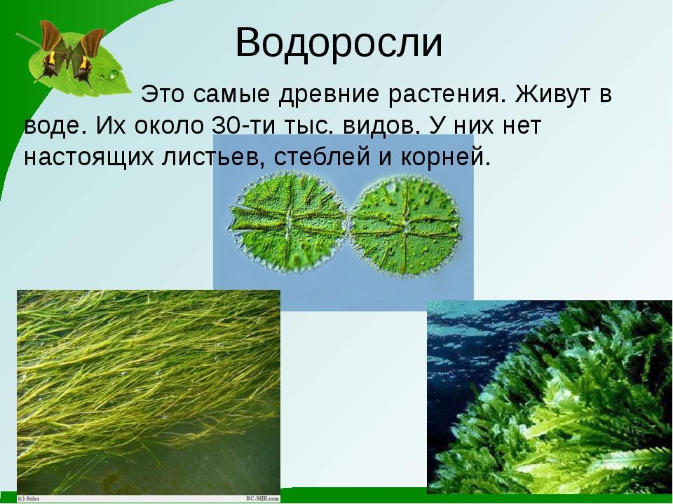 Водоросли Это самые древние растения. Живут в воде. Их около 30-ти тыс. видов...