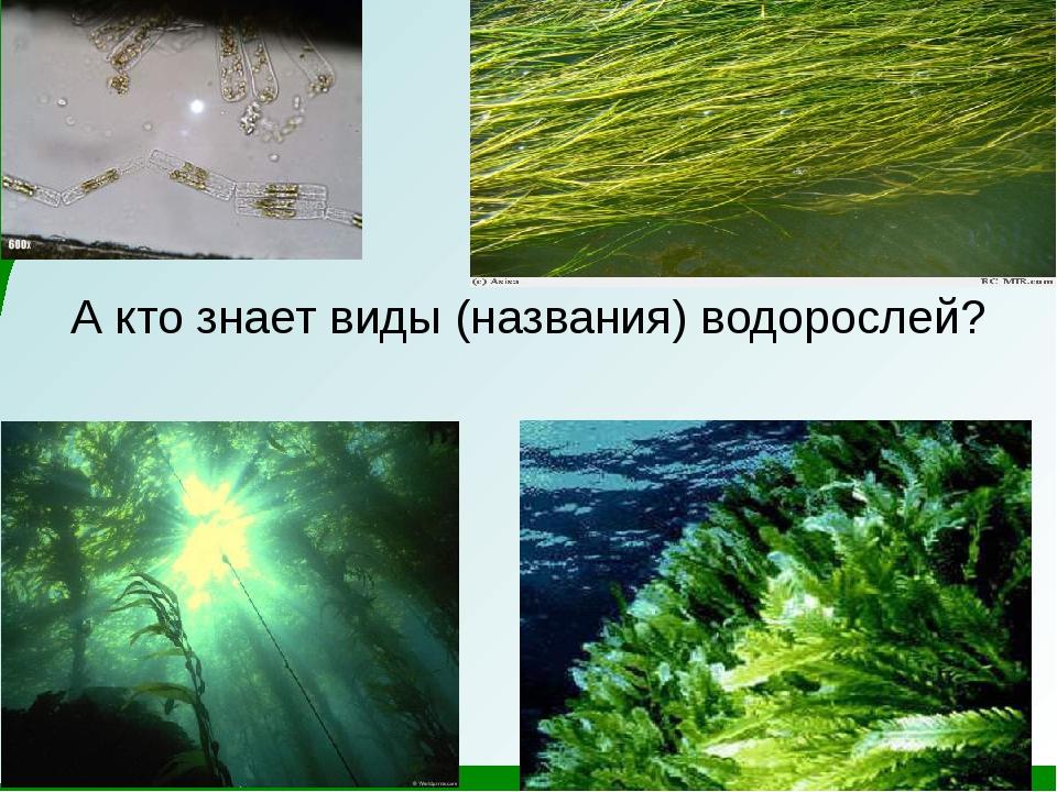 А кто знает виды (названия) водорослей?