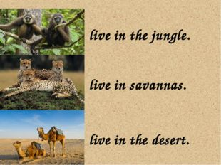 live in the jungle. live in savannas. live in the desert.