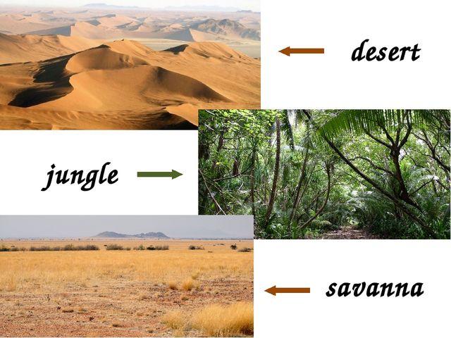 desert jungle savanna