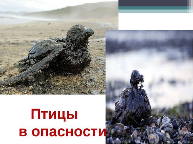 Птицы в опасности