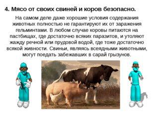 4. Мясо от своих свиней и коров безопасно. На самом деле даже хорошие условия
