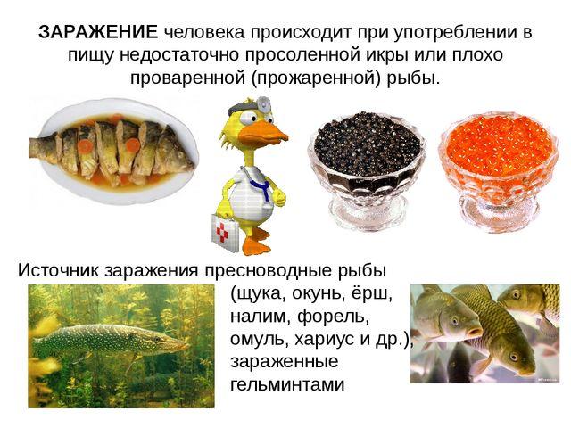 ЗАРАЖЕНИЕ человека происходит при употреблении в пищу недостаточно просоленно...