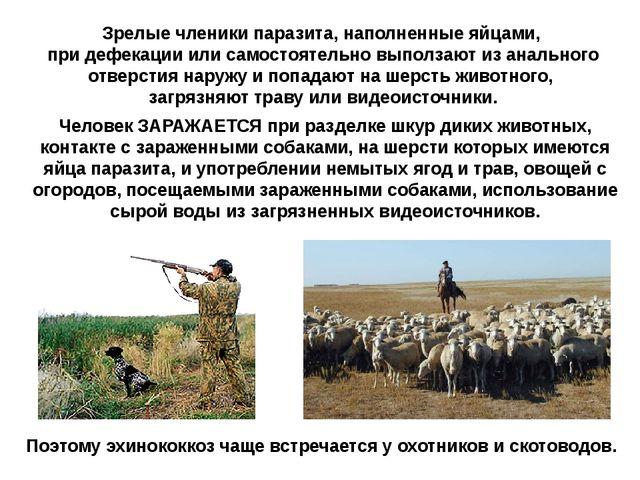 Человек ЗАРАЖАЕТСЯ при разделке шкур диких животных, контакте с зараженными с...