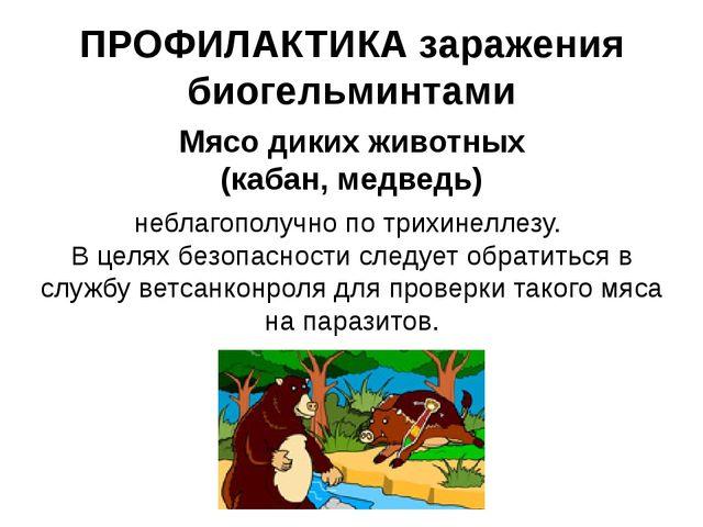 ПРОФИЛАКТИКА заражения биогельминтами Мясо диких животных (кабан, медведь) не...