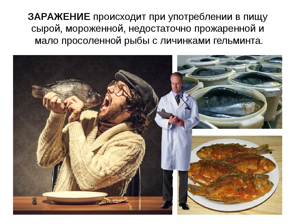 ЗАРАЖЕНИЕ происходит при употреблении в пищу сырой, мороженной, недостаточно...