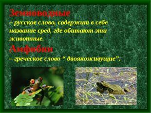Земноводные – русское слово, содержит в себе название сред, где обитают эти
