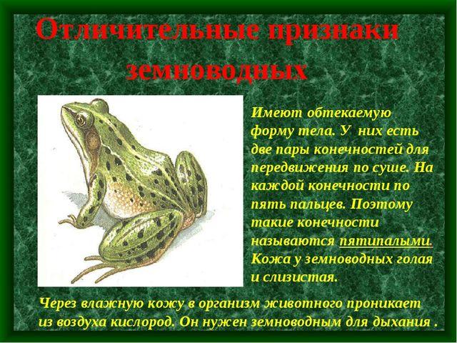 Отличительные признаки земноводных Имеют обтекаемую форму тела. У них есть дв...