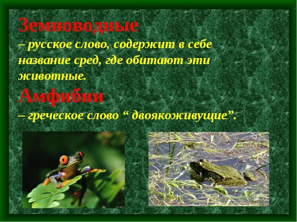 Земноводные – русское слово, содержит в себе название сред, где обитают эти...