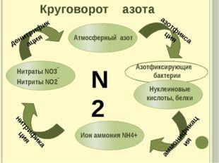Круговорот азота азотфиксация денитрификация аммонификация нитрификация N2 Аз