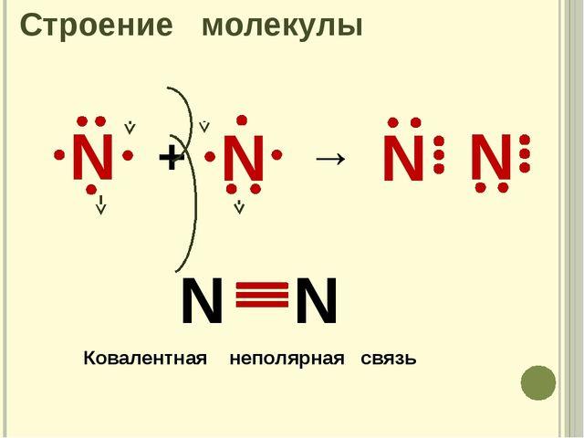 Строение молекулы N + → N Ковалентная неполярная связь N N N N