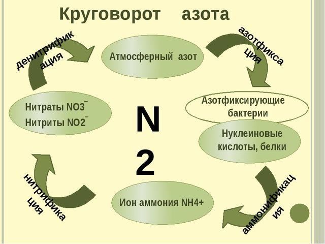 Круговорот азота азотфиксация денитрификация аммонификация нитрификация N2 Аз...
