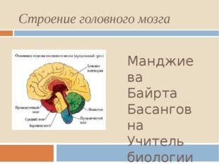 Строение головного мозга Манджиева Байрта Басанговна Учитель биологии МКОУ «З