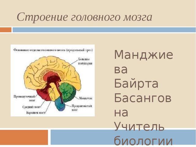 Строение головного мозга Манджиева Байрта Басанговна Учитель биологии МКОУ «З...