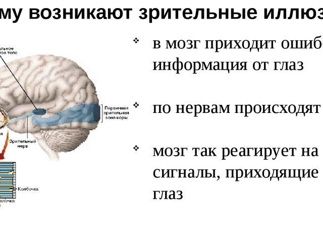 Почему возникают зрительные иллюзии? в мозг приходит ошибочная информация от...