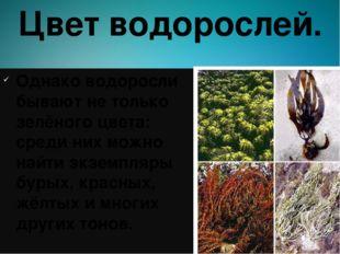 Цвет водорослей. Однако водоросли бывают не только зелёного цвета: среди них