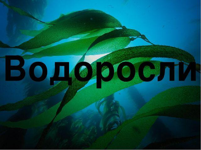 Автор презентации: Сёмик Анастасия Водоросли
