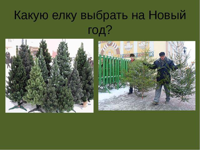 Какую елку выбрать на Новый год?
