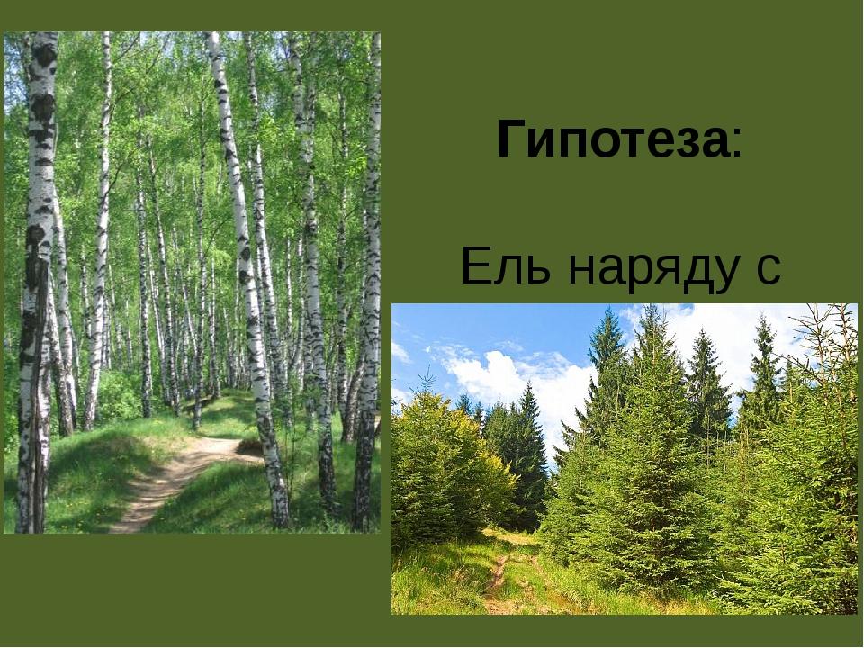 Гипотеза: Ель наряду с берёзой можно считать символом России.