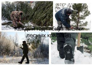 Каждый год гибнут тысячи лесных красавиц