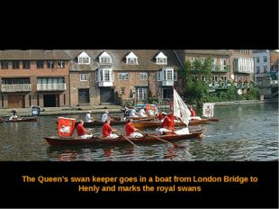 The Queen's swan keeper goes in a boat from London Bridge to Henly and marks