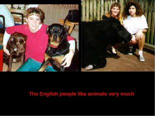 The English people like animals very much
