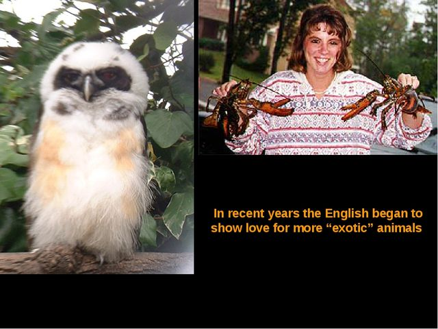 "In recent years the English began to show love for more ""exotic"" animals"