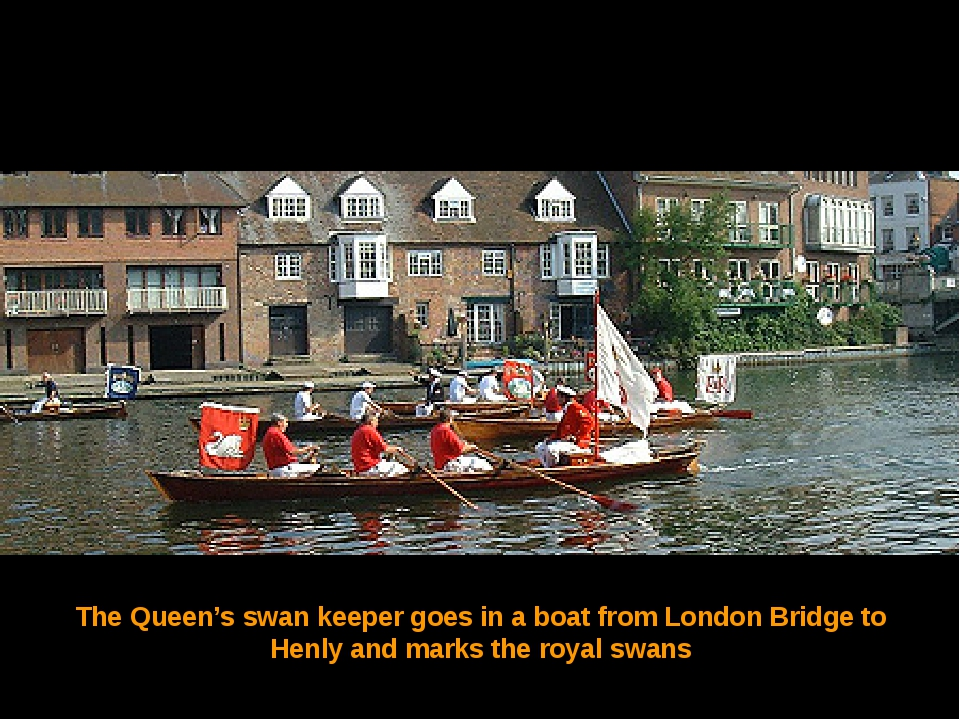 The Queen's swan keeper goes in a boat from London Bridge to Henly and marks...